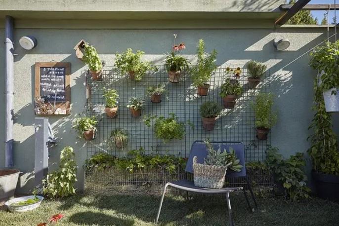 Un Treillis Qui Accueille Des Plantes En Pots Et Des Fraisiers