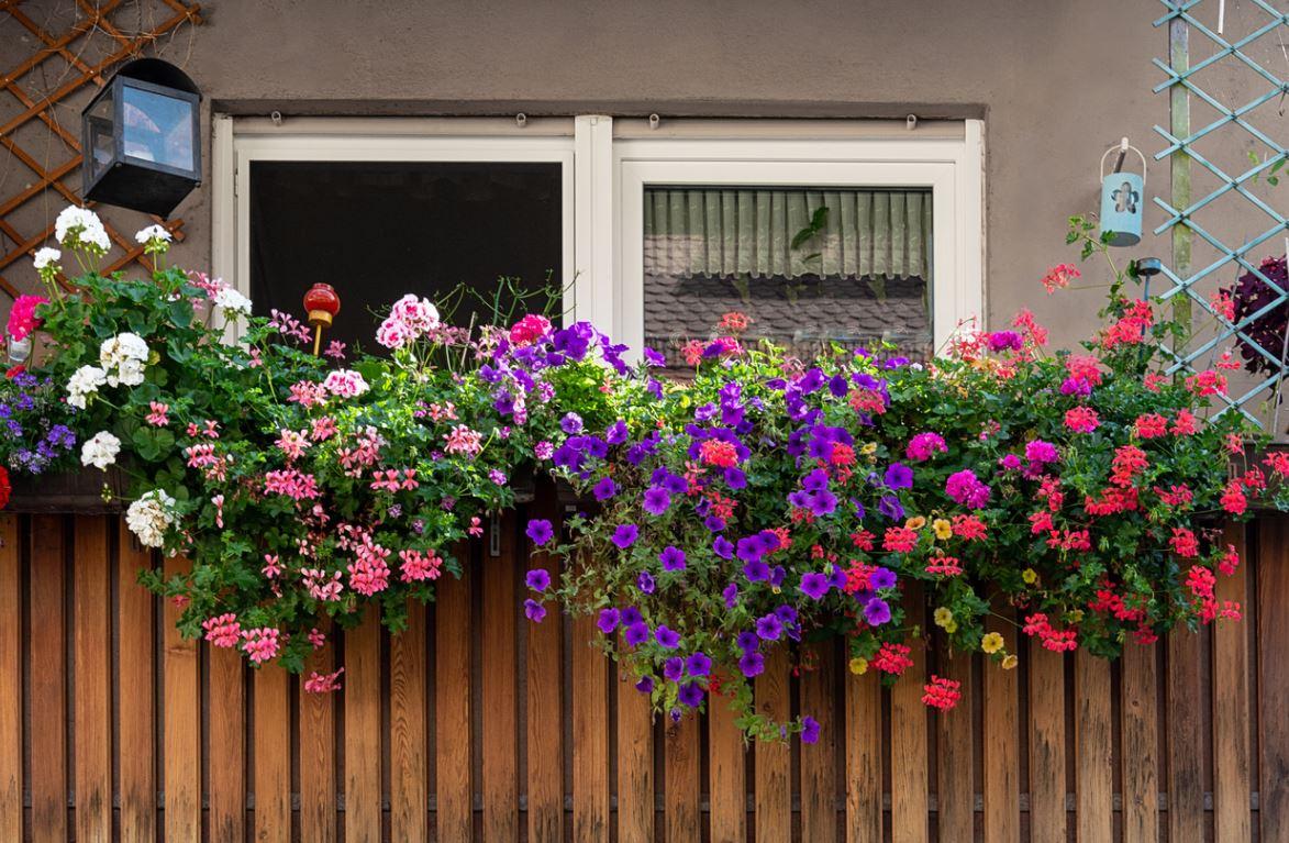 Balcon Végétation