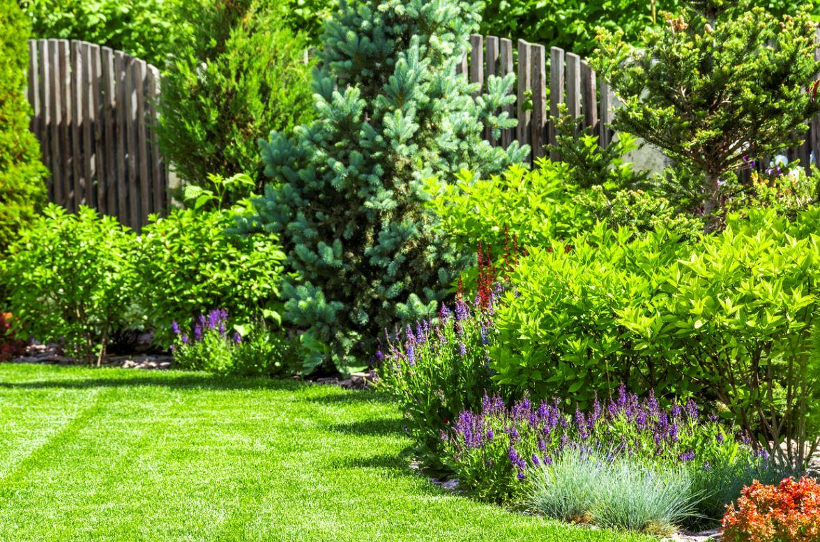 Brise Vue Végétal Dans Le Jardin