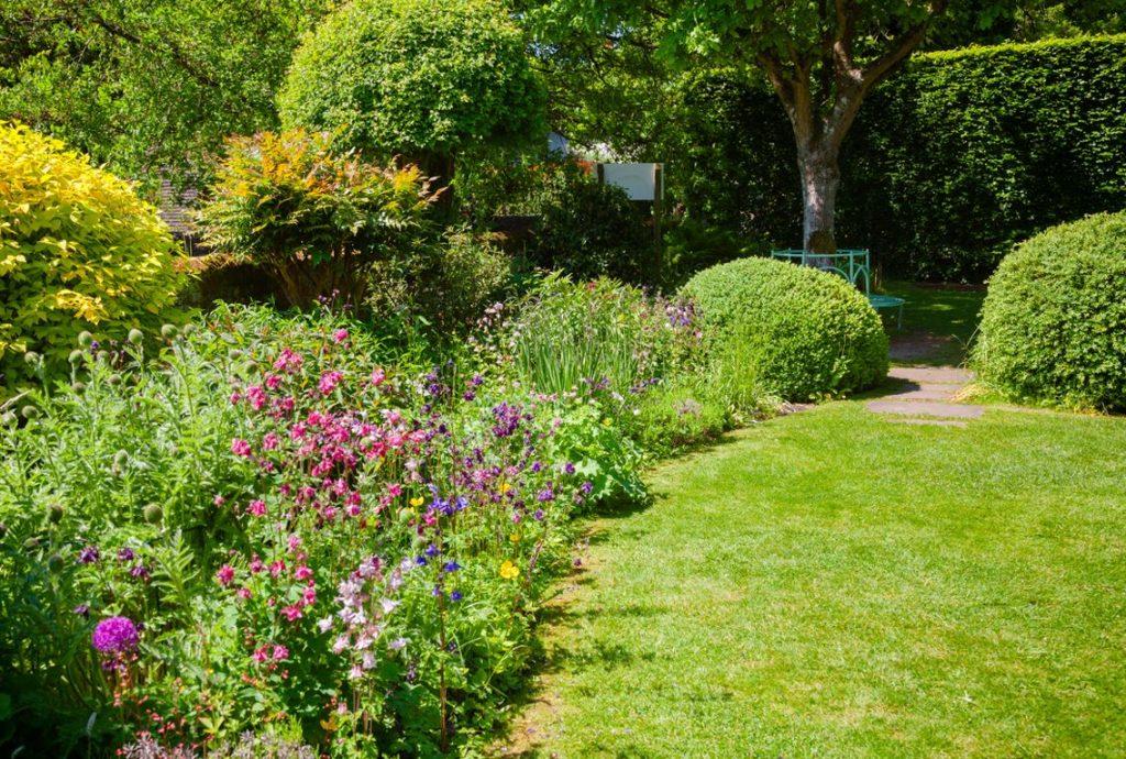 Haies Et Arbustes Dans Le Jardin