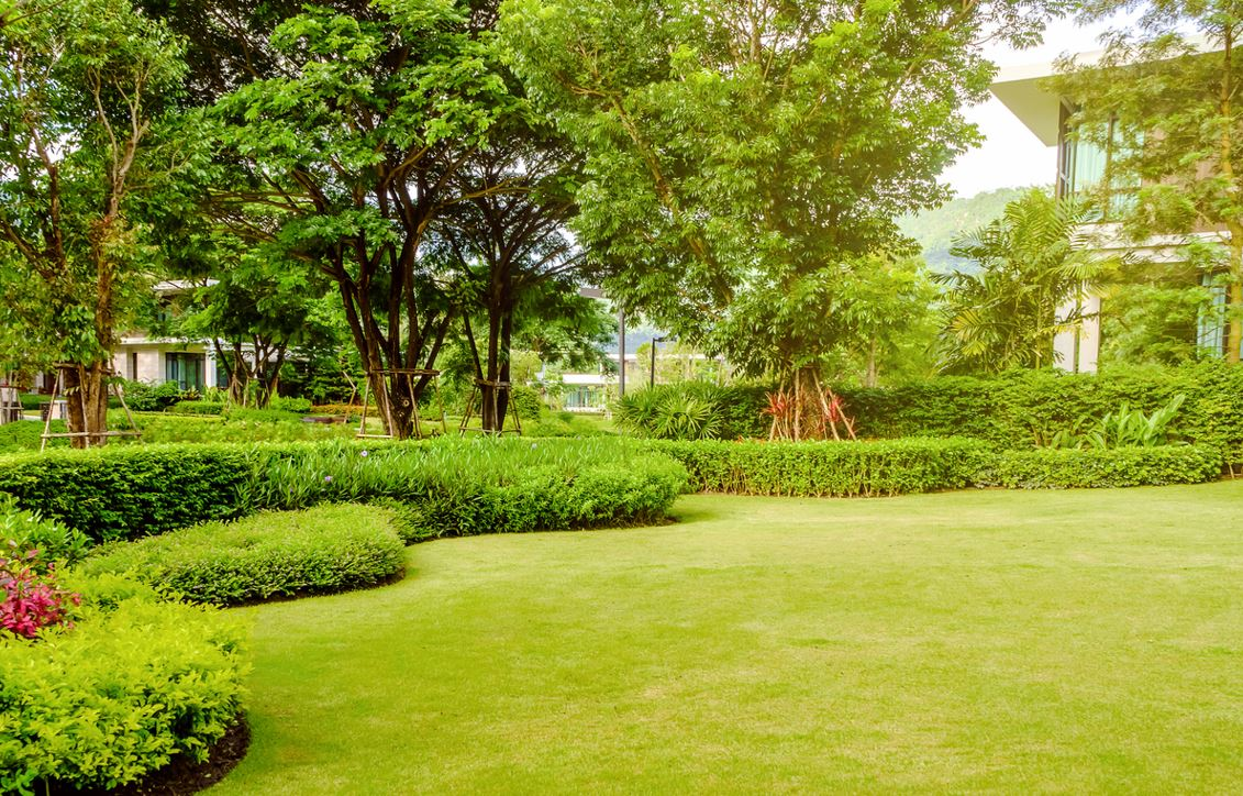 Plantations Haies Arbustes Jardin